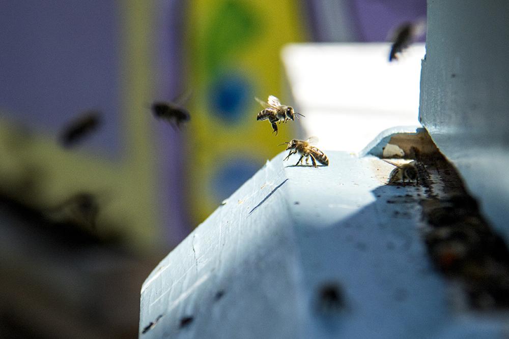 Sazza Restaurant's bees behind the Stanley Marketplace. (Kevin J. Beaty/Denverite)  aurora; stanley marketplace; denverite; colorado; kevinjbeaty;