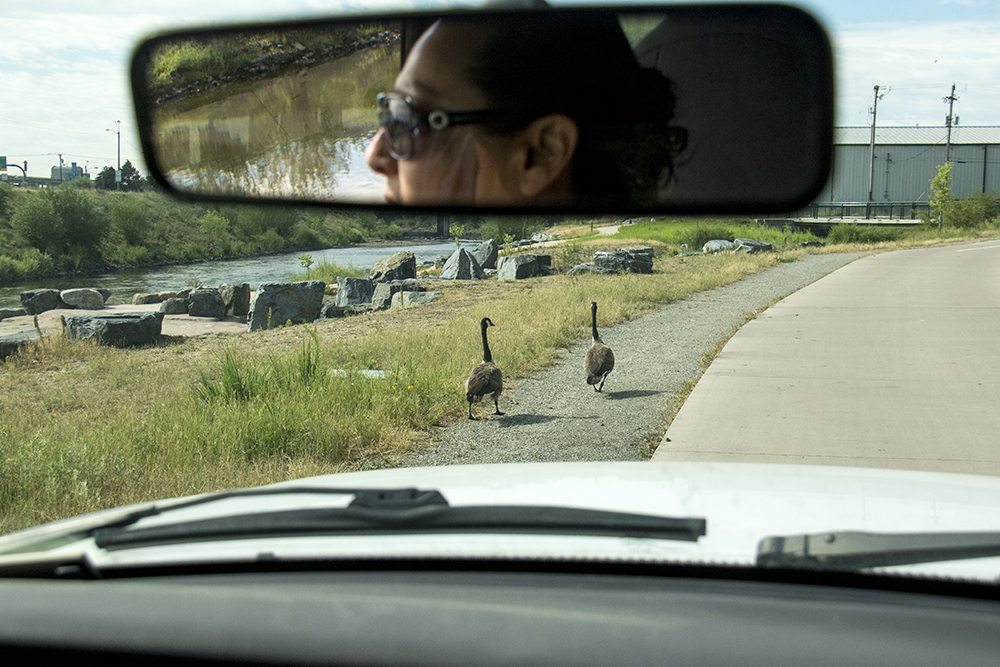 Vicki Vargus-Madrid counts geese along the South Platte River. (Kevin J. Beaty/Denverite)  south platte river; environment; ecology; denver; denverite; kevinjbeaty;