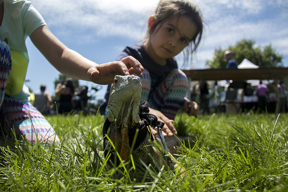 Young Elena (left) and Eva pet Rex the iguana. The 420 Games at Berkeley Lake Park, July 22, 2017. (Kevin J. Beaty/Denverite)  420 games; Berkeley Lake Park; berkely; kevinjbeaty; denver; denverite; colorado;