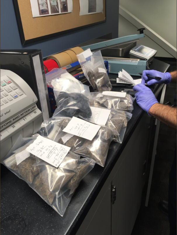 Officers sort out confiscated marijuana in Lakewood. (Lakewood Police Department)