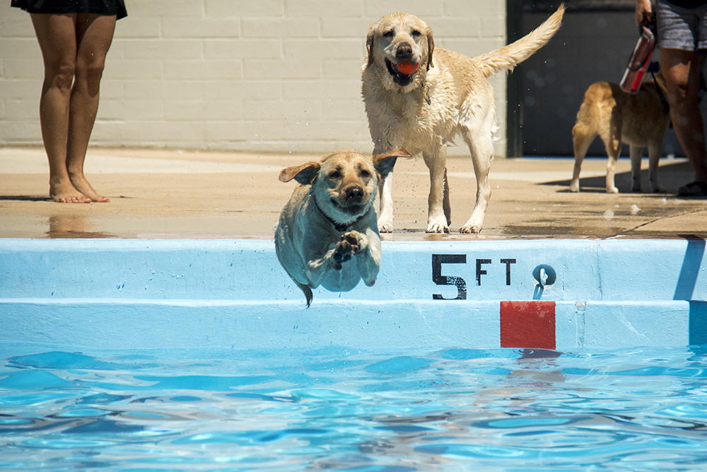 Dog-a-Pool-ooza at Cook Park Pool, Aug. 13, 2017. (Kevin J. Beaty/Denverite)  public pool; dogs; pets; Dog-a-Pool-ooza; cook park; denverite; colorado; kevinjbeaty; denver;