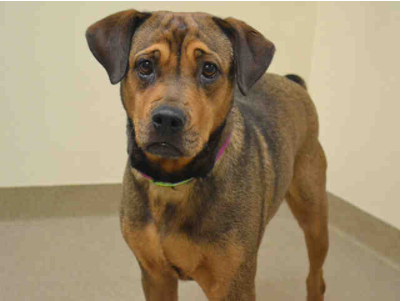 You could adopt Reese. (Aurora Animal Shelter)