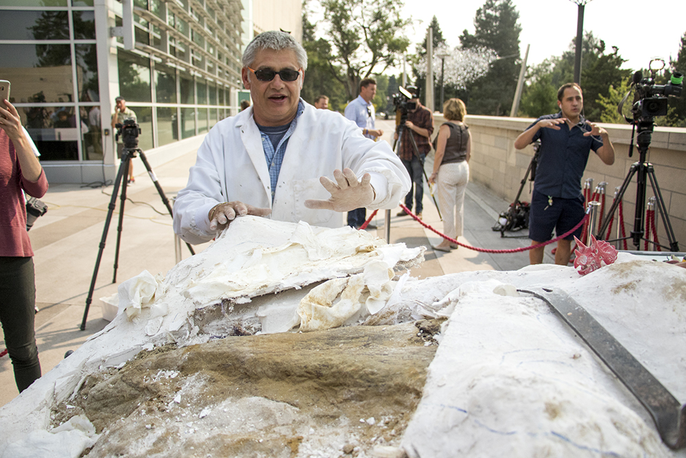 Denver Museum of Nature and Science chief fossil preparator Mike Getty unveils a triceratops bone excavated from Thornton, Sept. 8, 2017. (Kevin J. Beaty/Denverite)  denver; colorado; kevinjbeaty; denverite; denver museum of nature and science; science; dinosaur; triceratops; fossils;