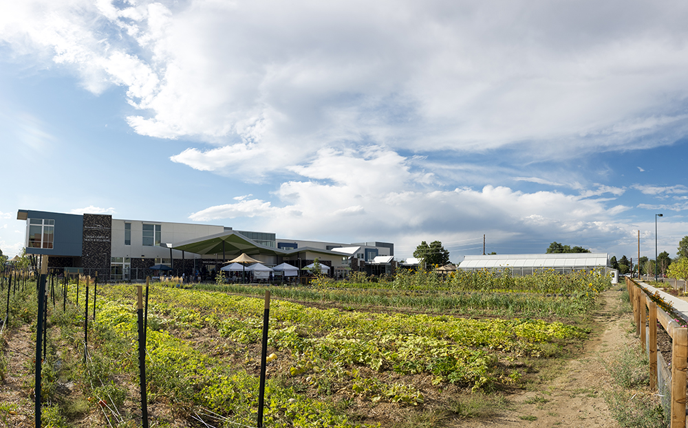 Fresh veggies grow in an expansive plot at the Dahlia Campus for Health - Mental Health Center of Denver in Northeast Park Hill.