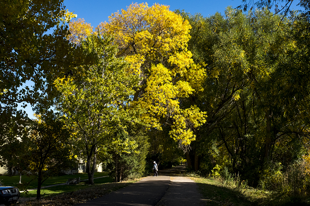 The Cherry Creek Trail on an autumn day, Oct. 15, 2017. (Kevin J. Beaty/Denverite)  nature; bike path; cowx; sunny; denverite; kevinjbeaty; colorado;