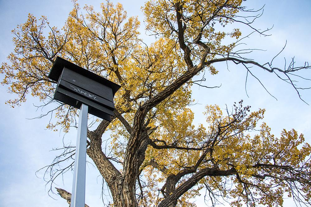 A bat box in Bear Creek Park, Oct. 19, 2017. (Kevin J. Beaty/Denverite)  bear creek park; fort logan; denver; denverite; colorado; kevinjbeaty;