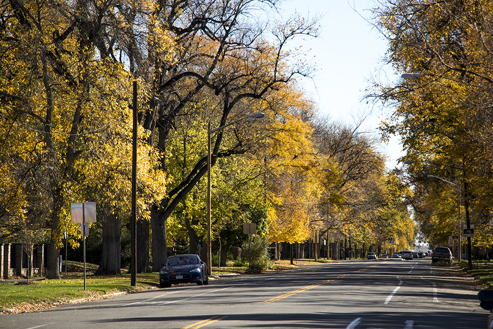 Montview Boulevard in South Park Hill is an autumn tunnel, Oct. 22, 2017. (Kevin J. Beaty/Denverite)