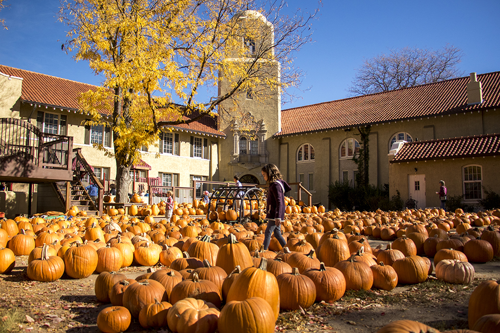 Pumpkins galore for sale at Park Hill United Methodist Church and Temple Micah, Oct. 22, 2017. (Kevin J. Beaty/Denverite)