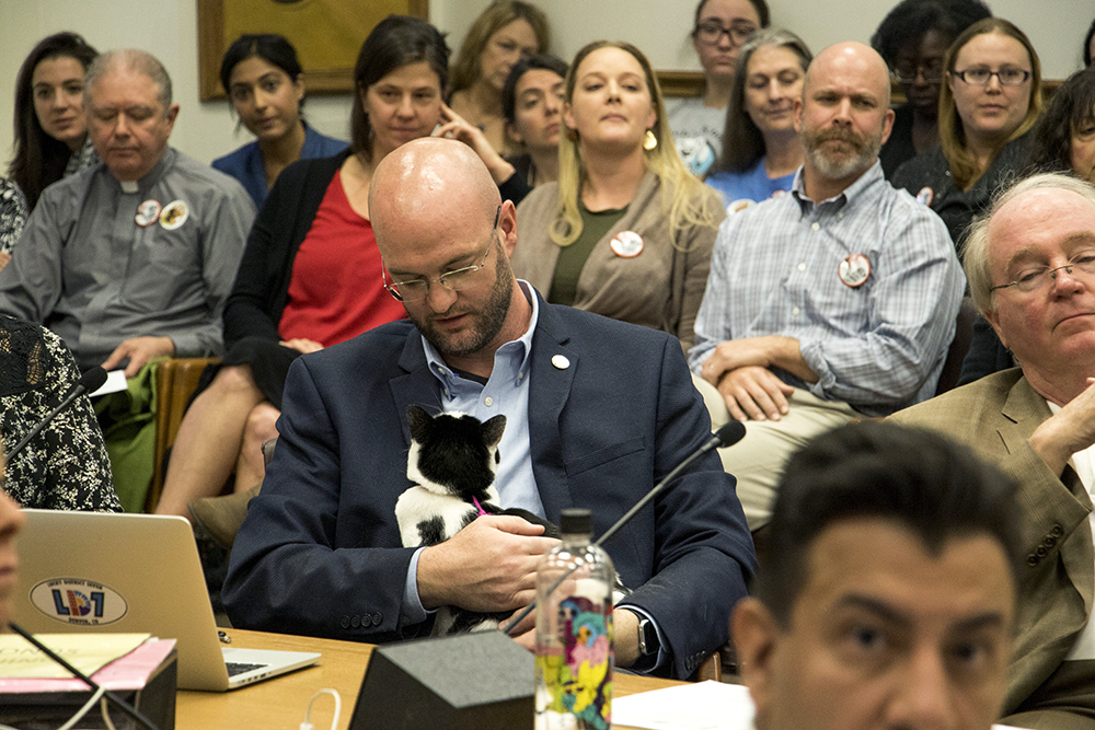 Councilman Jolon Clark's cat Kit sits on his lap during a Denver City Council committee meeting on proposed legislation banning declawing, Oct. 25, 2017. (Kevin J. Beaty/Denverite)