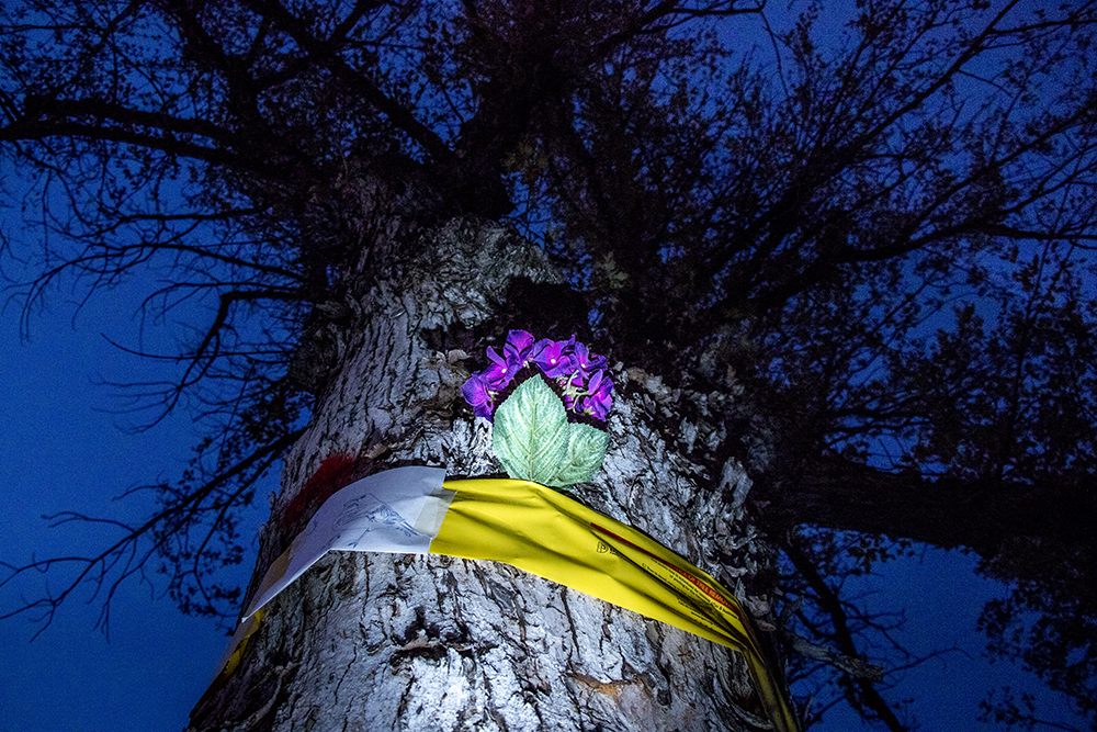 A vigil for doomed trees at City Park Golf Course, Oct. 29, 2017. (Kevin J. Beaty/Denverite)  city park golf course; protest; trees; denver; denverite; colorado; kevinjbeaty; skyland;