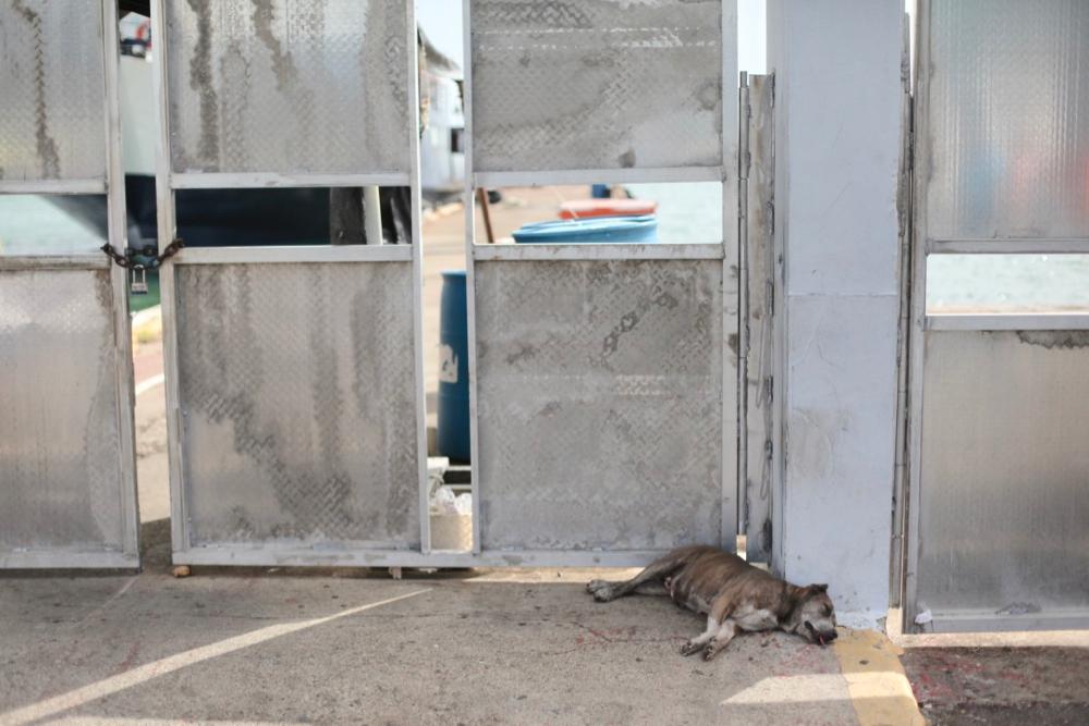 A stray dog avoiding the heat in Fajardo, Puerto Rico, July 2017. (Andrew Kenney/Denverite)