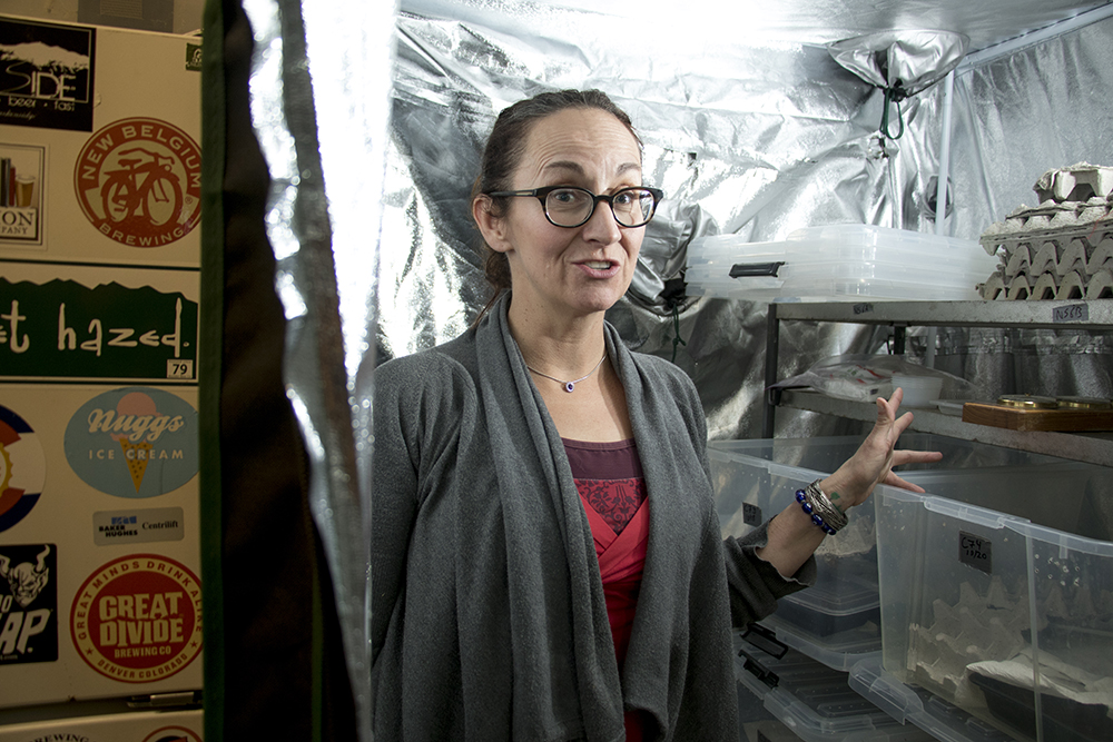 Wendy Lu McGill in the cricket nursery. Rocky Mountain Micro Ranch, Nov. 3, 2017. (Kevin J. Beaty/Denverite)  denver; colorado; insects; agriculture; bug farm; food; sustainability; morrison road; westwood; denverite; kevinjbeaty;