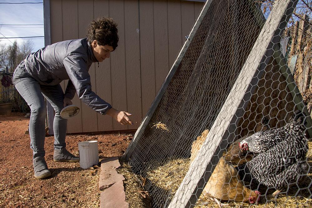 "Chickens, ""the ladies of the 80s,"" in Nikki Pike's backyard, Nov. 19, 2017. (Kevin J. Beaty/Denverite)denver; colorado; sound totem; public art; denverite; kevinjbeaty;"