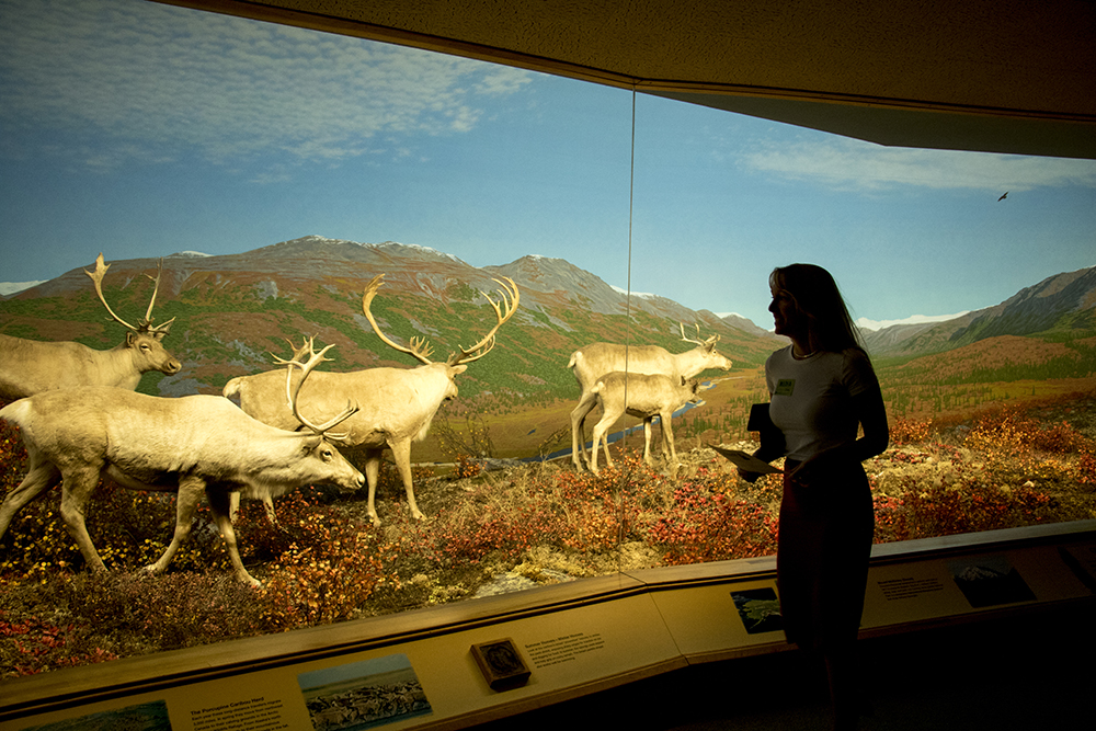 Ashley Dean takes on horned ungulates. Denver Museum of Nature and Science, Jan. 3, 2017. (Kevin J. Beaty/Denverite)  gnomes; dmns; denver museum of nature and science; denverite; kevinjbeaty; denver; colorado;