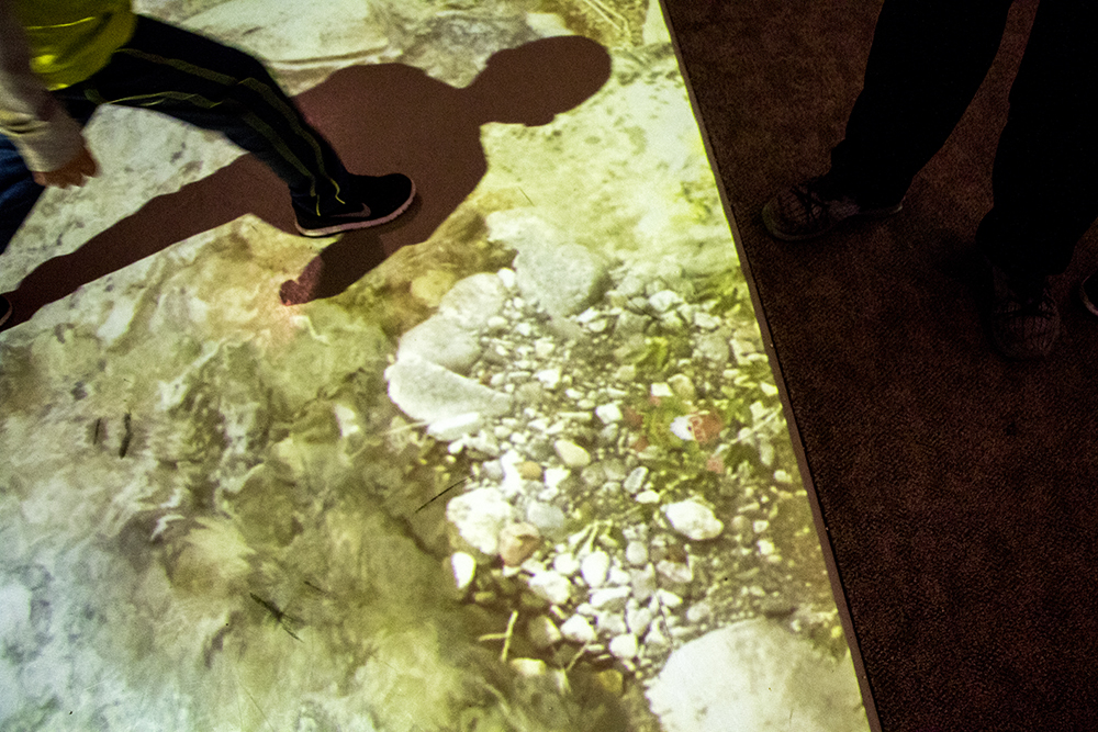 Can you see the gnome hidden in this video installation of a river on the floor? Denver Museum of Nature and Science, Jan. 3, 2017. (Kevin J. Beaty/Denverite)  gnomes; dmns; denver museum of nature and science; denverite; kevinjbeaty; denver; colorado;
