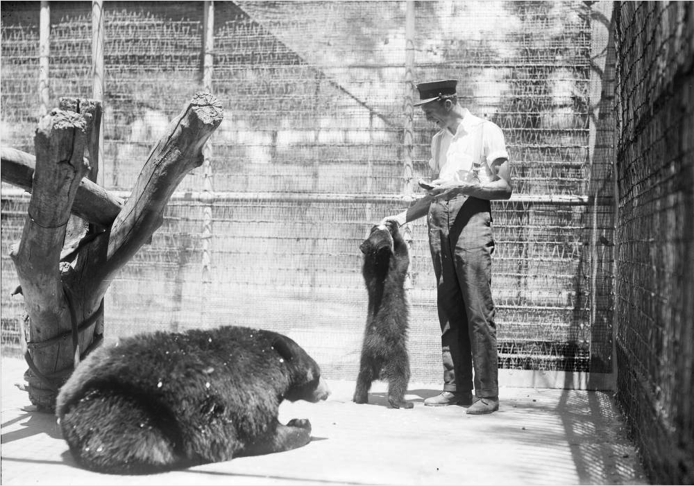 A zookeeper feeds a bear cub at the Denver Zoo between 1910 and 1920. (Harry Mellon Rhoads/Western History & Genealogy Dept./Denver Public Library)