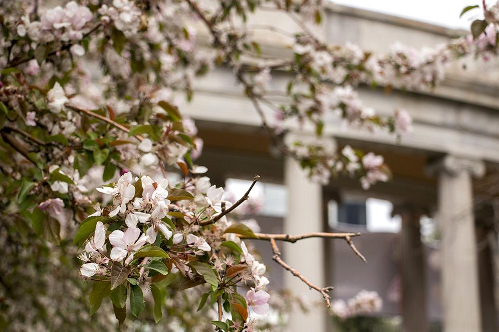Spring in Civic Center Park, April 20, 2018. (Kevin J. Beaty/Denverite)