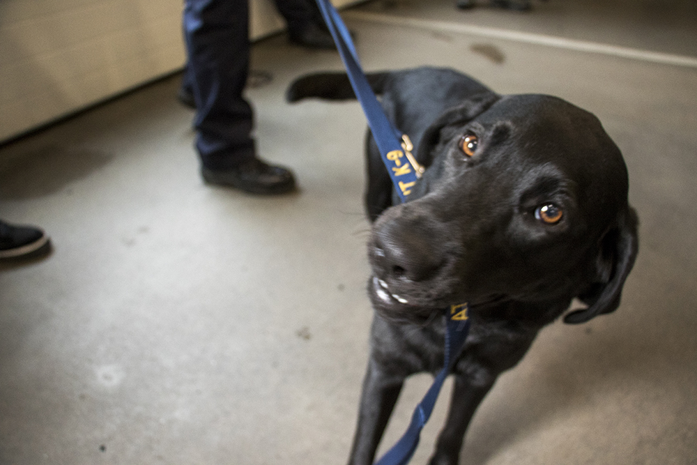 Cora the accelerant-sniffing dog is officially welcomed to her new job with the Denver Fire Department, May 3, 2018. (Kevin J. Beaty/Denverite)  pets; dogs; denver fire department; denver; colorado; denverite; kevinjbeaty;