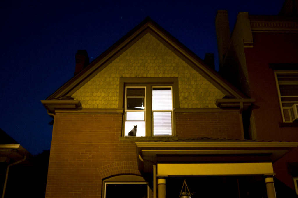 Goodnight, window cat. June 12, 2018. (Kevin J. Beaty/Denverite)