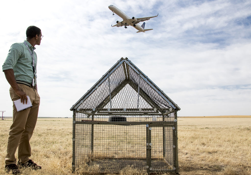 Phillip Lucas, a communication specialist with Denver International Airport, a Swedish goshawk trap and an landing plane seen on DIA's airfield, July 19, 2018. (Kevin J. Beaty/Denverite)