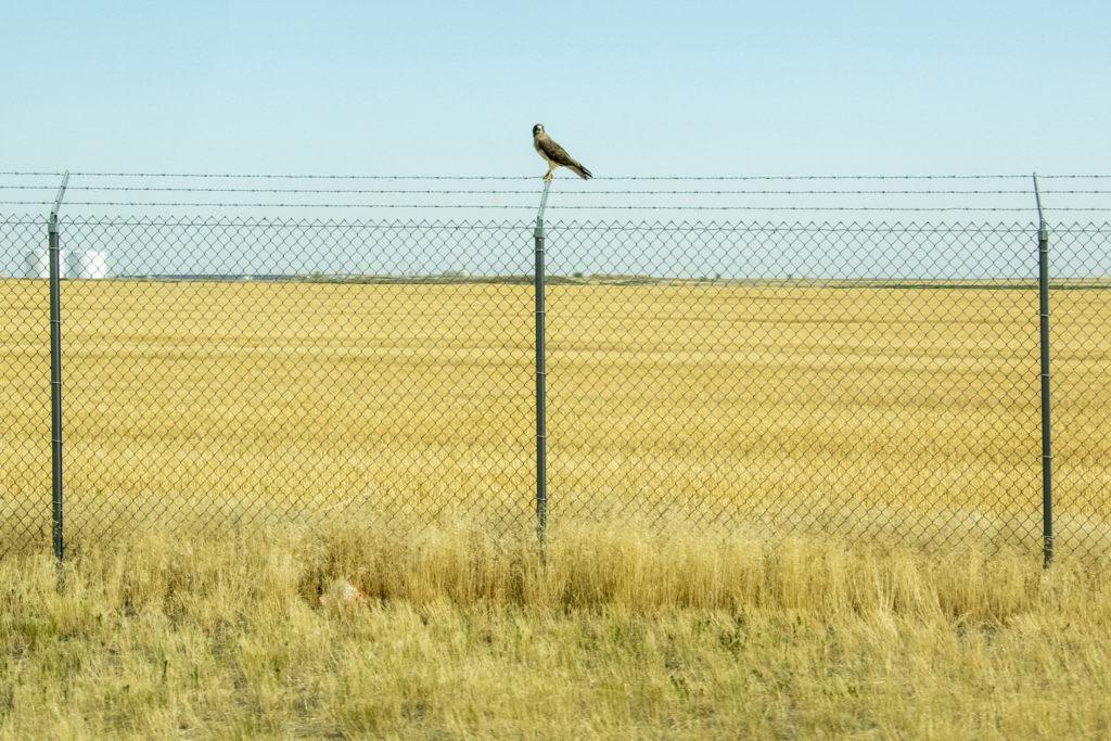 Denver International Airport, July 19, 2018. (Kevin J. Beaty/Denverite)