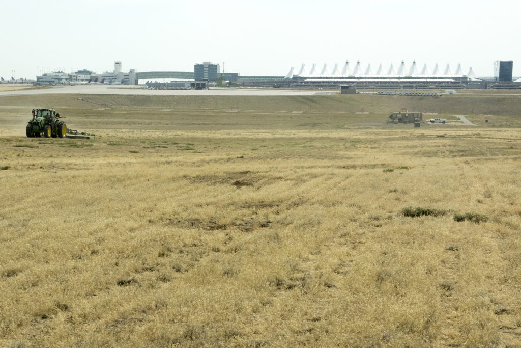 Tractors mow Denver International Airport's grassy monoculture, July 19, 2018. (Kevin J. Beaty/Denverite)