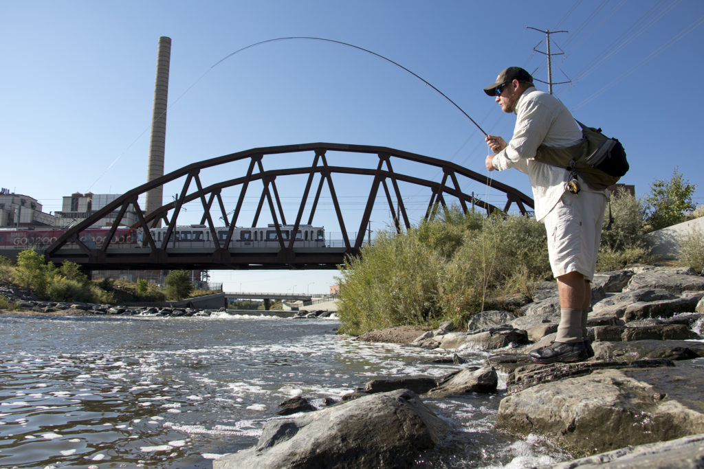 Ty Clifton quests for carp near Sun Valley. Denver Trout Unlimited's 12th annual Carpslam flyfishing tournament on the South Platte River, Sept. 9, 2018. (Kevin J. Beaty/Denverite)