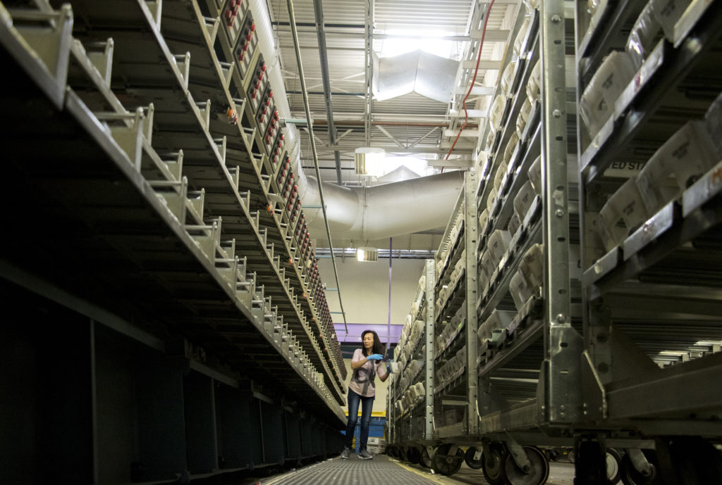 Jane Huyng processes ballots sorted for mailing by a massive machine inside the U.S. Postal Service's sorting and shipping facility in Stapleton, Oct. 16, 2018. (Kevin J. Beaty/Denverite)