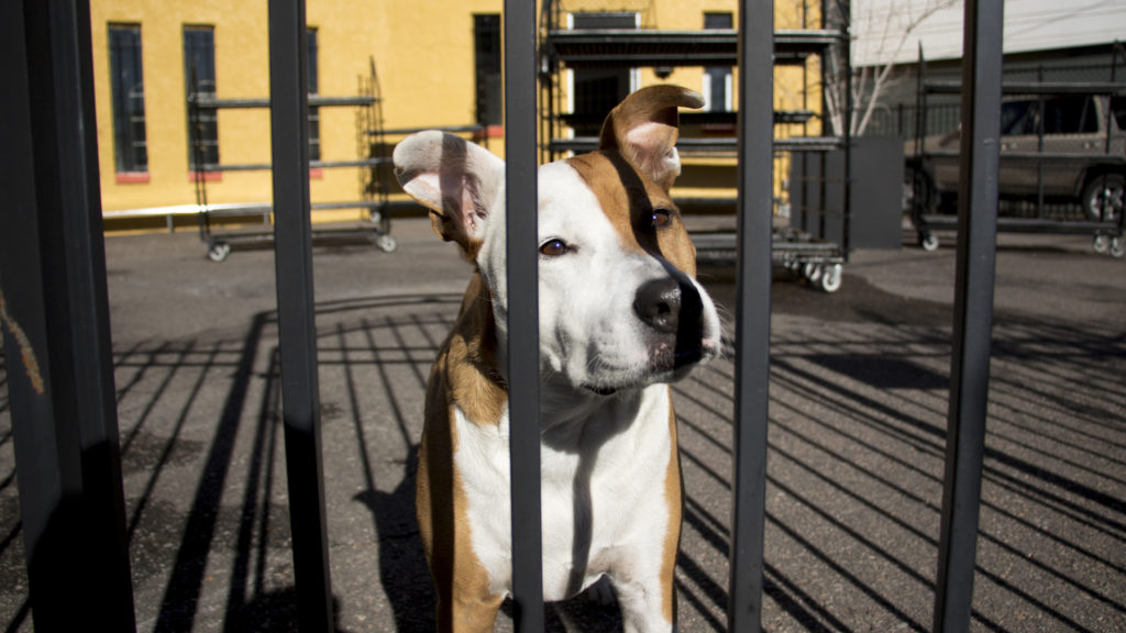 Henry the flower shop dog hangs out in front of the soon-opening Plant Garage, which will replace Urban Roots in the Golden Triangle area, Nov. 13, 2018. (Kevin J. Beaty/Denverite)