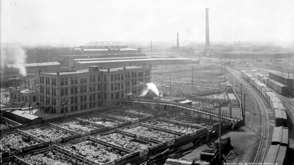 View of Denver Union Stock Yards Company cattle pens and the Omaha and Grant smelter smokestack in the distance, circa 1915. (Louis Charles McClure/Denver Public Library/Western History Collection/MCC-4205)