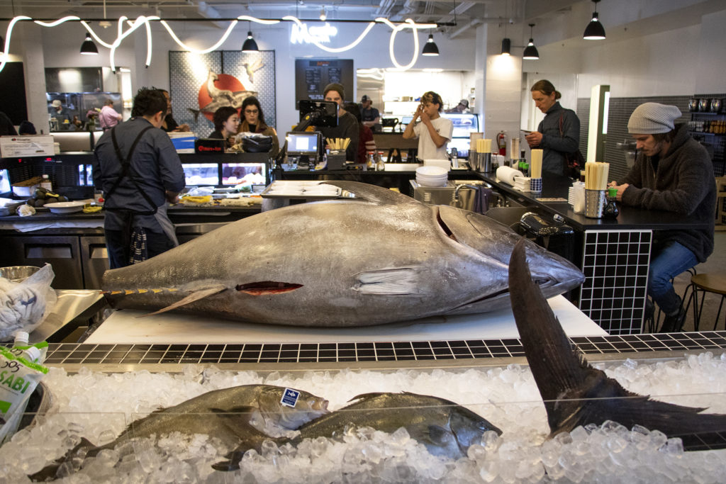 A 280 pound tuna on the counter at Misaki on Broadway during the soft opening for Broadway Market, February 20, 2019. (Kevin J. Beaty/Denverite)