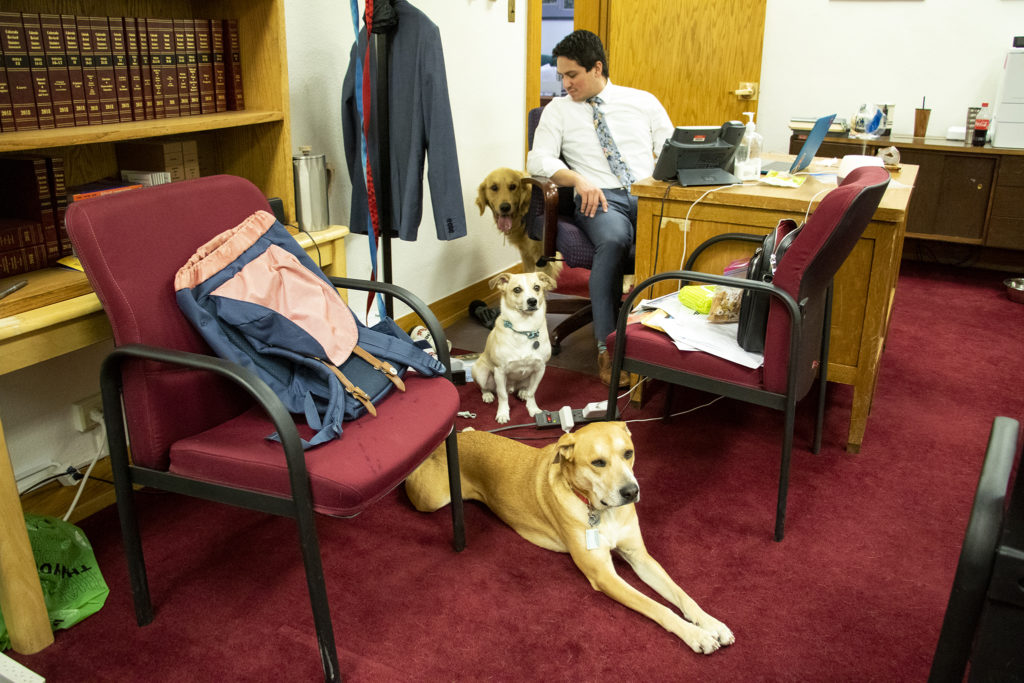 Michael Templeton sits with Sven, Gary and Annabelle inside the shared office space of Senators Lois Court, Faith Winter and Kerry Donovan, April 30, 2019. (Kevin J. Beaty/Denverite)