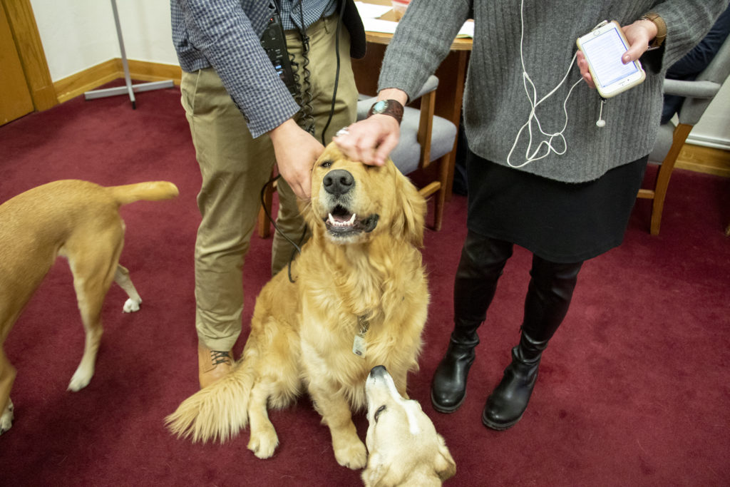 Sven gets pets. The shared office Senators Lois Court, Faith Winter and Kerry Donovan inside the State Capitol, April 30, 2019. (Kevin J. Beaty/Denverite)