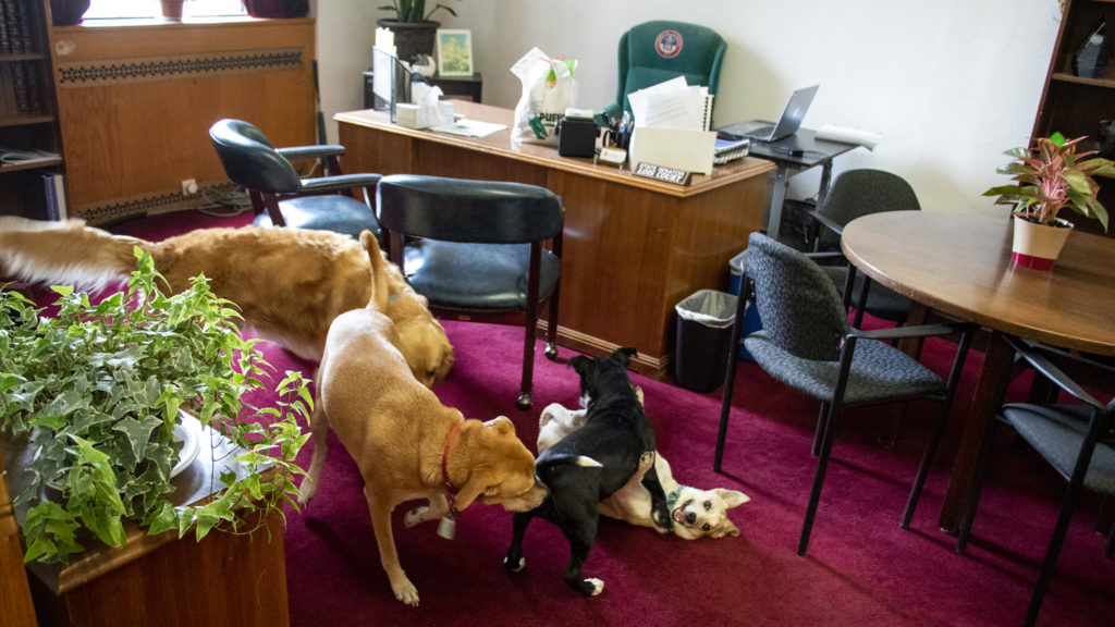 Sven, Gary, Annabelle and Lulu play inside Senator Lois Court's office, April 30, 2019. (Kevin J. Beaty/Denverite)