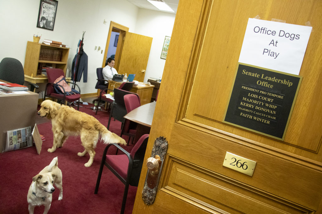 """""""Office dogs at play"""" posted outside the shared offices of Senators Lois Court, Faith Winter and Kerry Donovan, April 30, 2019. (Kevin J. Beaty/Denverite)"""