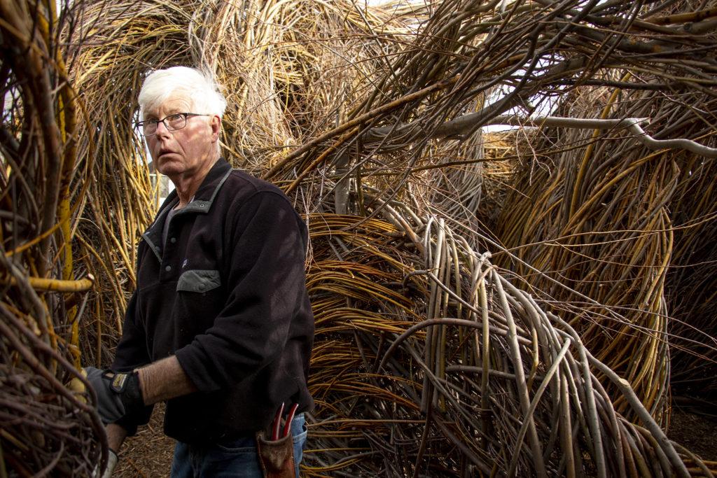 "Artist Patrick Dougherty at work on ""Stickwork"" at the Denver Botanic Gardens' Chatfield Farms, April 18, 2019. (Kevin J. Beaty/Denverite)"