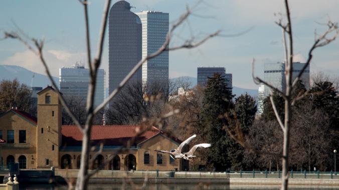 Un ganso vuela por el City Park el 29 de noviembre, 2019. (Kevin J. Beaty/Denverite).