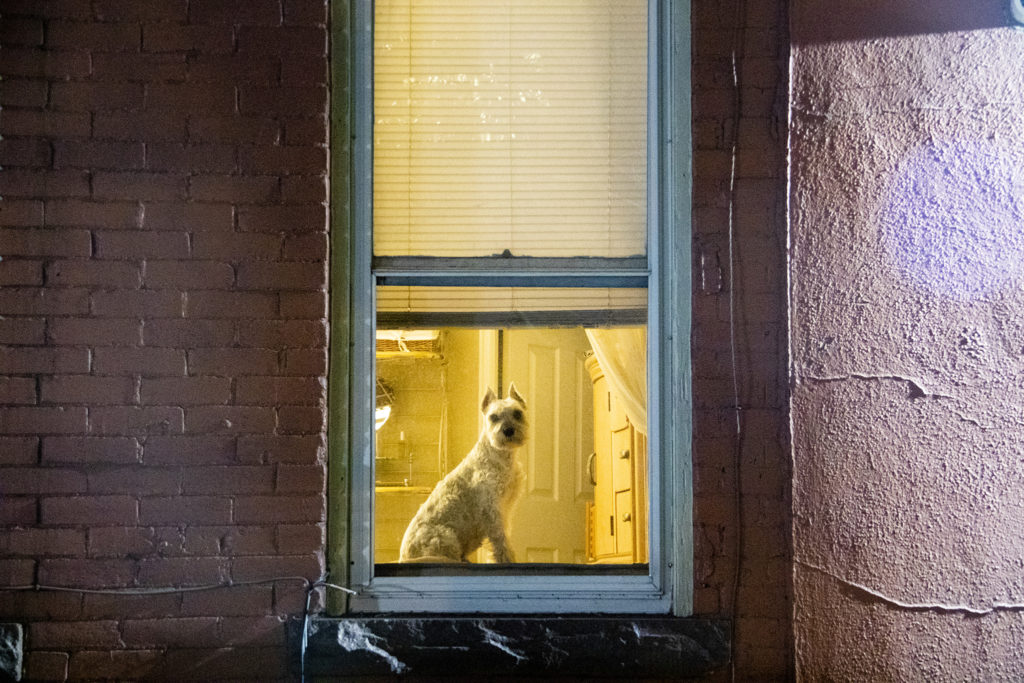 Harry is a very nice Denver window dog, April 22, 2019. (Kevin J. Beaty/Denverite)