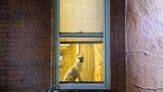 Harry is a very nice Denver window dog, April 22, 2019. (Kevin J. Beaty/Denverite)