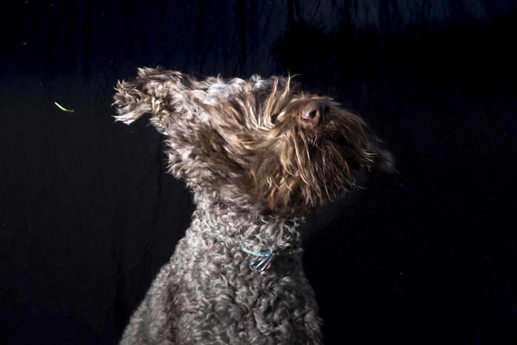 Riggins poses for a portrait at City Park Jazz, July 14, 2019. (Kevin J. Beaty/Denverite)