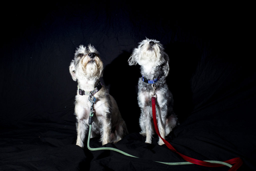 Winnie and Gia pose for a portrait at City Park Jazz, July 14, 2019. (Kevin J. Beaty/Denverite)