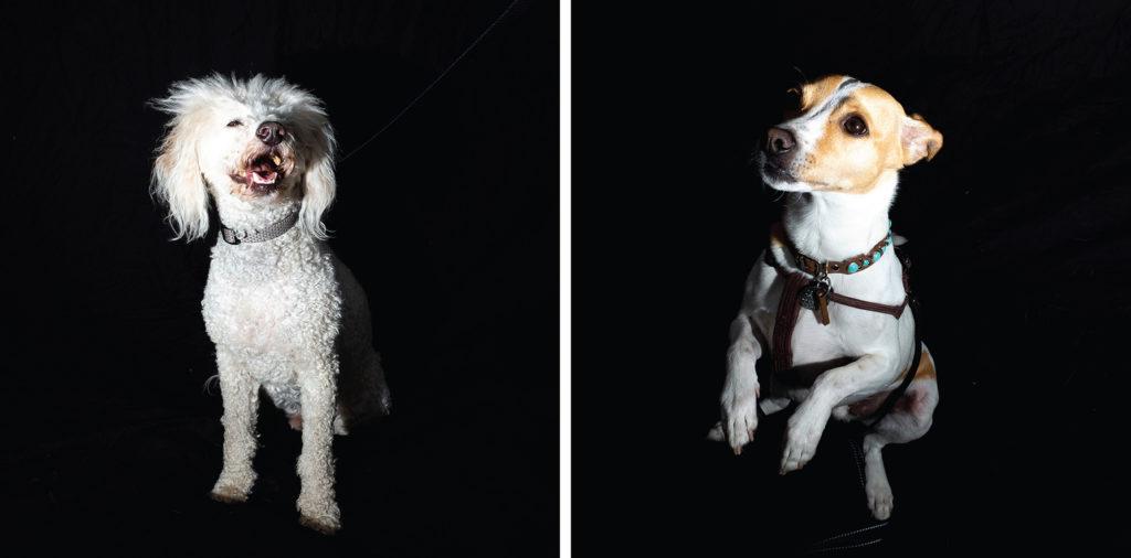 Lyon (left) and Benton pose for portraits at City Park Jazz, July 14, 2019. (Kevin J. Beaty/Denverite)