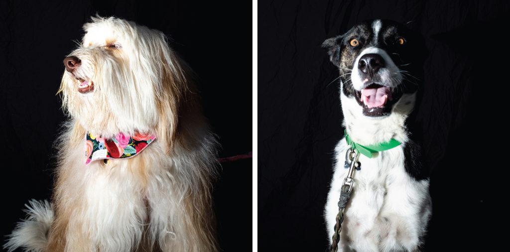 Milly (left) and Yogi pose for portraits at City Park Jazz, July 14, 2019. (Kevin J. Beaty/Denverite)