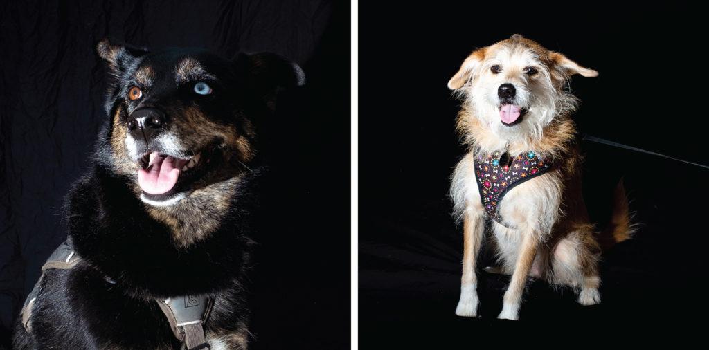 Sky and Foxy pose for portraits at City Park Jazz, July 14, 2019. (Kevin J. Beaty/Denverite)