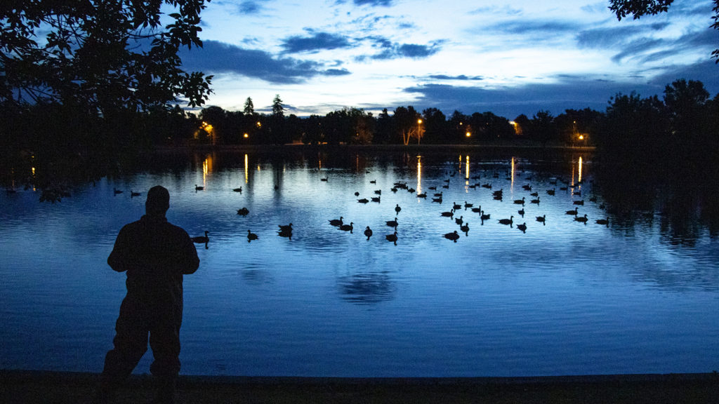 A USDA biologist watches Canada geese float on Ferril Lake at City Park, July 1, 2019. (Kevin J. Beaty/Denverite)