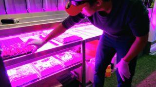 Metro Caring urban farming intern Wilber Portillo. (Donna Bryson/Denverite)