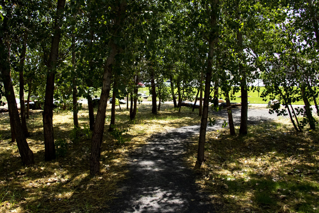 A wooded path through the First Creek Natural Playground in Denver's DIA neighborhood, Aug. 1, 2019. (Kevin J. Beaty/Denverite)