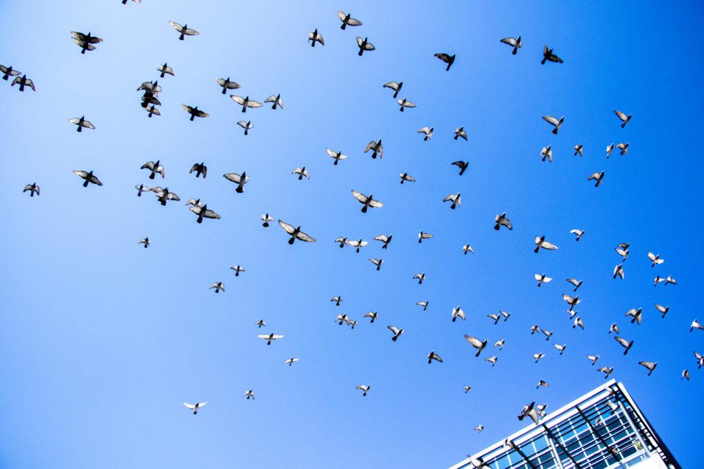 Birds, y'all. Birds. Sept. 13, 2019. (Kevin J. Beaty/Denverite)
