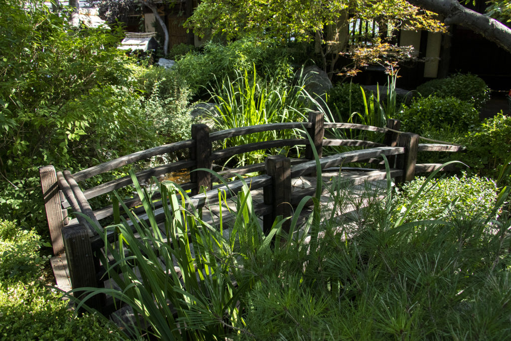 Dinner time in the garden behind the Domo Japanese Country Food Restaurant, Aug. 31, 2019. (Kevin J. Beaty/Denverite)