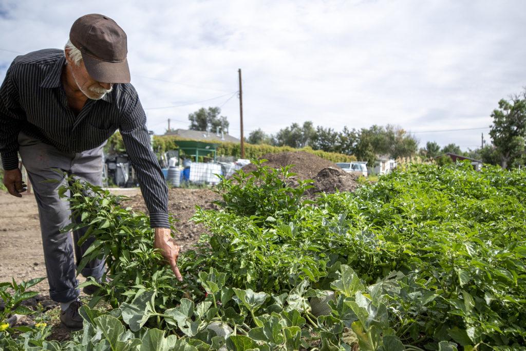 David de Santiago, farm manager with Re:Vision, shows off the fruits of his labor, Westwood. Sept. 17, 2019. (Kevin J. Beaty/Denverite)